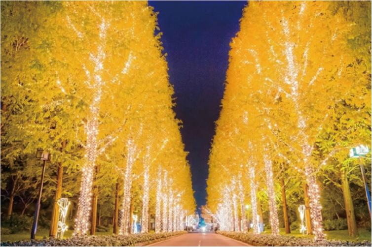 佐井通りの並木道